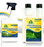 Growers Trust Powdery Mildew Killer Non-Toxic, Biodegradable - Natural Fungicide -Treatment...