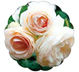 Stargazer Perennials White Eden Climbing Rose Plant Potted Reblooming White Hardy Climber - Easy To...