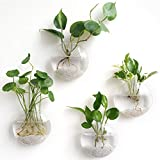Mkono 4 Pack Wall Hanging Glass Terrariums Planter Flower Vase for Hydroponics Plants, Home Office...