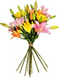 Benchmark Bouquets 12 Stem Assorted Asiatic Lilies, No Vase (Fresh Cut Flowers)