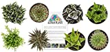 Altman Plants Assorted Live Succulents Windowsill & Indoor Collection Easy care plants for Windows,...