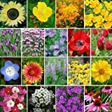 4400 Pollinator Attracting Wildflower Seeds to Attract Bees, Butterflies, and Other Beneficial...