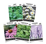 Sow Right Seeds - Herbal Tea Collection - Lemon Balm, Chamomile, Mint, Lavender, Echinacea Herb Seed...