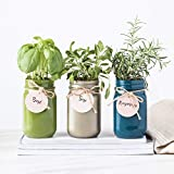 Thoughtfully Gifts, Mason Jar Garden, Grow Your Own Herbs Gift Set, Contains Rosemary, Basil and...