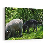 Rosenberry Rooms Canvas Wall Art Prints - Hairy Hungarian Sheep Pig Breed Mangalitsa (10 x 8 inches)
