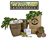 Mr. Sprout & Co Large Herb Kit: 10 Seed Varieties - Medicinal and Culinary Herb Garden Kit - Basil,...