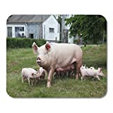 Emvency Mouse Pads Green Mom Sow and Her Piglets on Summer Pasture Mouse Pad for notebooks, Desktop...