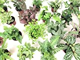 Mini Terrarium Plants (6 Plants) (2' Pots) Fairy Garden Plants Assorted Varieties