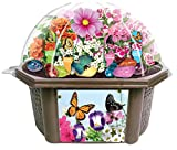 Toys By Nature Grow Your Own Butterfly Garden - Delightful Sweet Smelling Flowers - Includes...