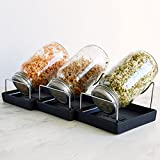 Seed Sprouting Jar Kit - 3 Sprouter Mason Jars with Screen Lids Stands and Trays - Sprout Germinator...
