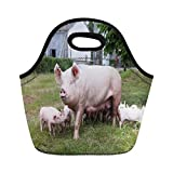 Semtomn Lunch Bags Green Mom Sow and Her Piglets on Summer Pasture Neoprene Lunch Bag Lunchbox Tote...