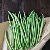 Blue Lake Bush Bean 274 Seeds - 1 Lbs - Treated, Non-GMO, Heirloom, Open Pollinated - Vegetable...