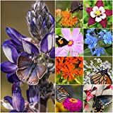 Package of 30,000 Seeds, Bird and Butterfly Wildflower Mixture (100% Pure Live Seed) Non-GMO Seeds...