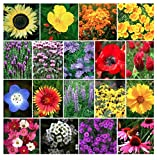 Bulk 1 Ounce: 13,000 Pollinator Attracting Wildflower Seeds to Attract Bees, Butterflies, and Other...