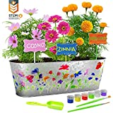 Dan&Darci Paint & Plant Flower Growing Kit - Grow Cosmos, Zinnia, Marigold Flowers - Includes...