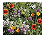 Beneficial Bug Attracting Wildflower Seeds to Attract Bees, Butterflies, and Other Beneficial...