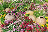 Easy Gardening Roll Out Flowers Wildflower Ground Cover Garden kit - CGC3000-3 Pack - 10-Foot...