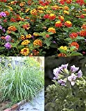 Mosquito Trio - 9 Mosquito Repellent Plants - Includes Three Varieties: 3 Citronella Geranium...