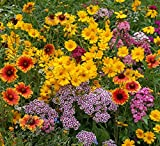 Easy Garden Roll Out Flowers Butterfly and Hummingbird Garden kit - HB3000-3 Pack - 10-Foot by...
